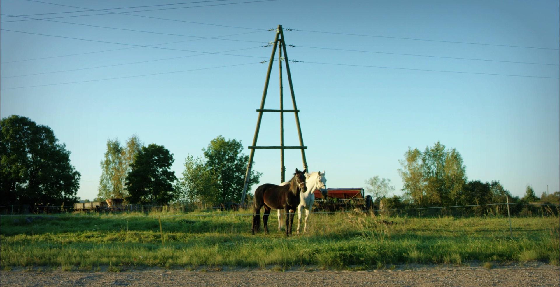 Zirdzin, hallo! (Hello, horse!) (by Laila Pakalnina, 2017)